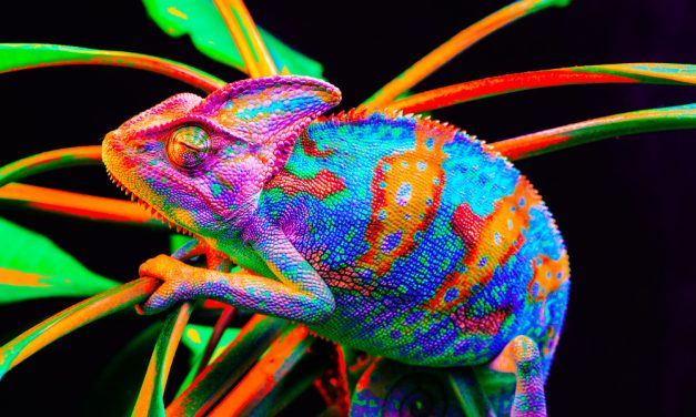 To Communicate Across Cultures, Be a Chameleon